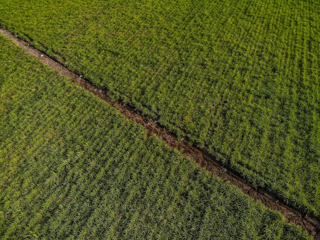 Luchtfoto van een prachtige groene landbouwgrond