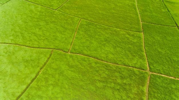 Luchtfoto van een rijstvelden