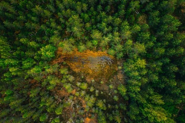 Luchtfoto van een wateroppervlak in het midden van een bos, omringd door hoge groene bomen