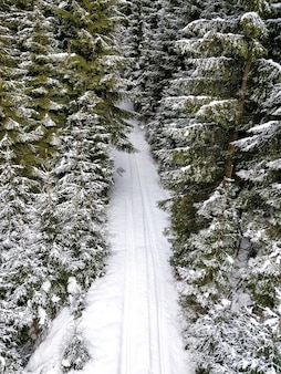 Luchtfoto van een weg met bandensporen omgeven door pijnbomen in de winter