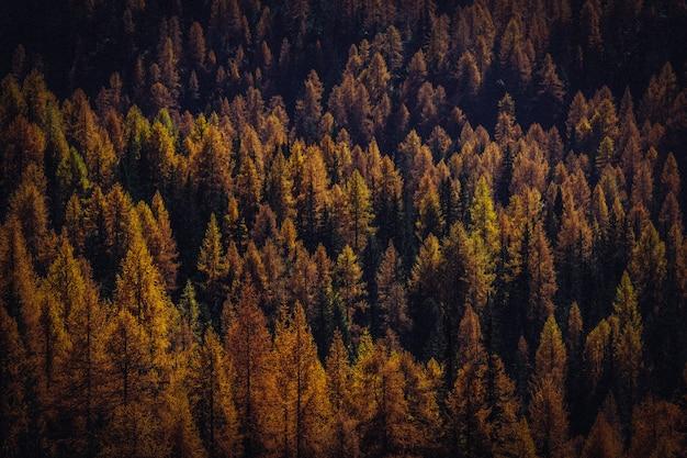 Luchtfoto van gele en bruine bomen