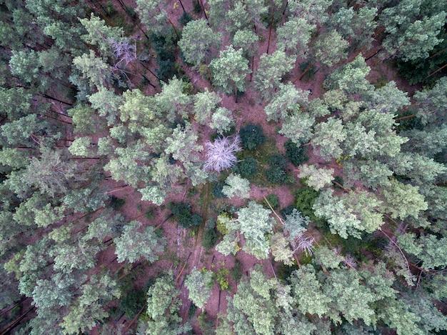 Luchtfoto van groen bos