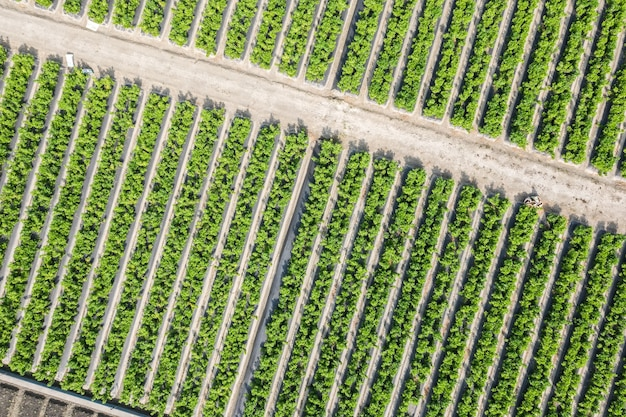 Luchtfoto van groene boerderij met groente en fruit in changhua, taiwan