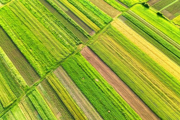 Luchtfoto van groene landbouwgebieden in het voorjaar met verse vegetatie na het zaaien seizoen op een warme zonnige dag.