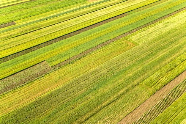 Luchtfoto van groene landbouwvelden in het voorjaar met verse vegetatie na het zaaiseizoen op een warme zonnige dag.