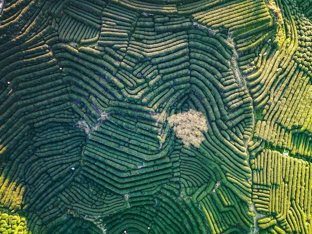Luchtfoto van hangzhou west lake longjing tea mountain