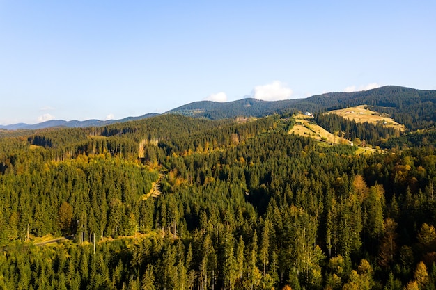 Luchtfoto van heldergroene sparren en gele herfst bomen in herfst bos en verre hoge bergen.