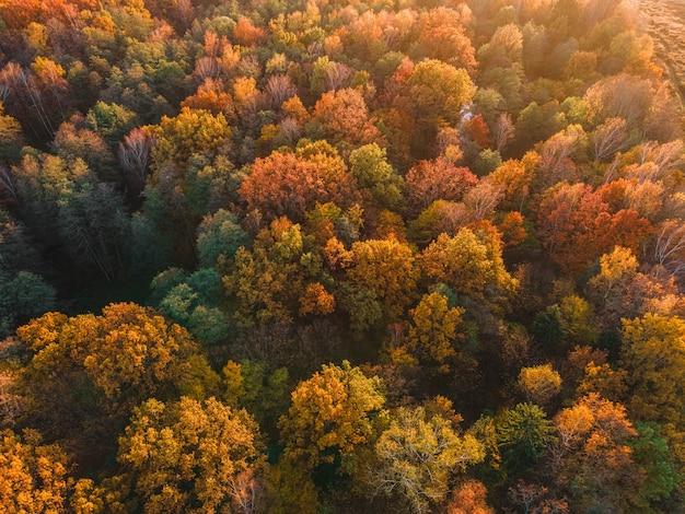 Luchtfoto van herfstbos prachtig landschap met bomen met groene, rode en oranje bladeren