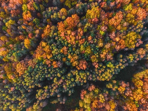 Luchtfoto van herfstbos uitzicht vanaf drone