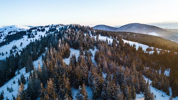 Luchtfoto van het betoverende schilderachtige landschap van slanke hoge sparren die groeien op besneeuwde heuvels