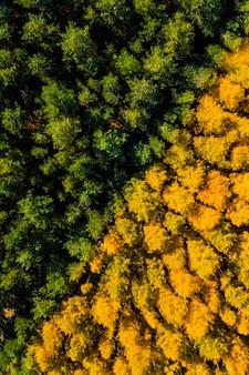 Luchtfoto van het geelgroene bos in de herfst van bovenaf