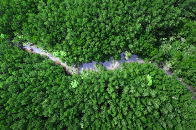 Luchtfoto van het mangrove bos