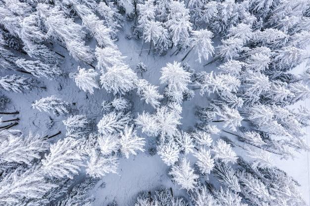 Luchtfoto van het palmboombos in de winter, allemaal bedekt met sneeuw