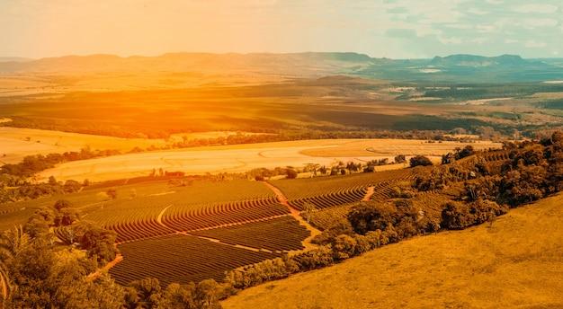 Luchtfoto van koffie boerderij veld