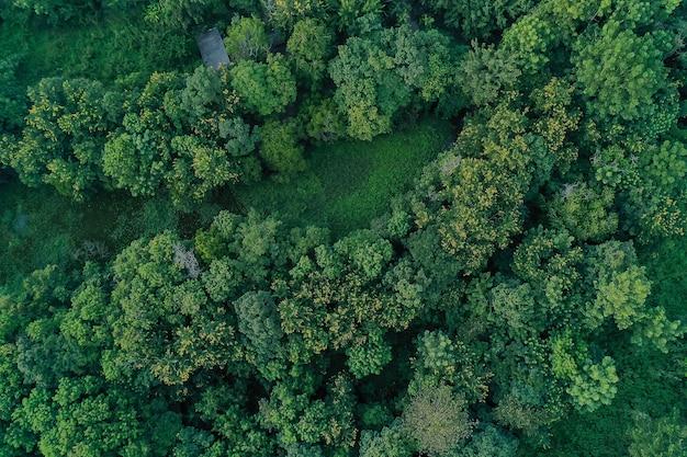 Luchtfoto van landbouwgrond / rijst veld in thailand