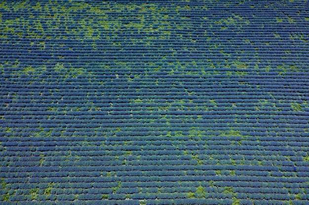 Luchtfoto van lavendel bloem veld in frankrijk provence veld met lavendel rijen lavendelolie produc...