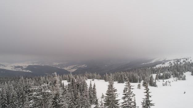 Luchtfoto van mooie dikke sparren die groeien op de heuvels en skipistes op een bewolkte ijzige winterdag