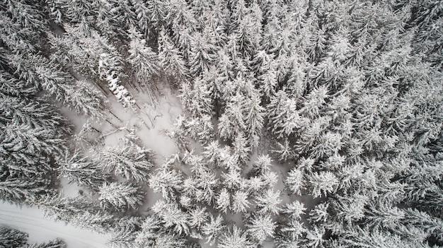 Luchtfoto van mooie slanke hoge besneeuwde sparren groeien in het winter woud
