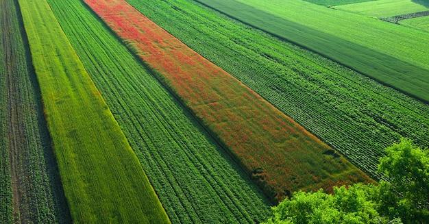 Luchtfoto van papaverbloemen op een tarweveld