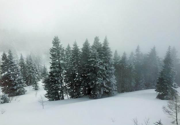 Luchtfoto van pijnbomen bedekt met sneeuw, landschap in de winter