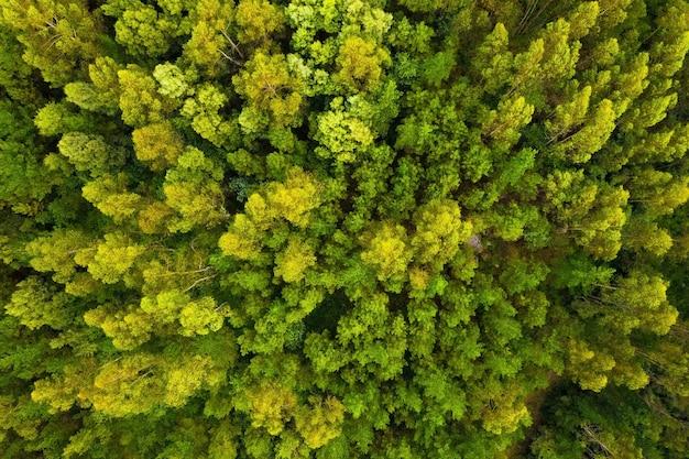Luchtfoto van prachtig groen bos, van bovenaf geschoten met een drone, natuurlijk landschap