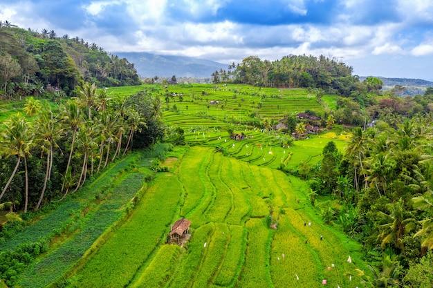 Luchtfoto van terrasvormige rijstvelden bali, indonesië