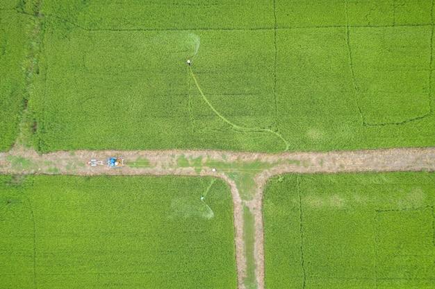 Luchtfoto van vliegende drone. thais landbouwers bespuitend chemisch product aan jong groen padieveld