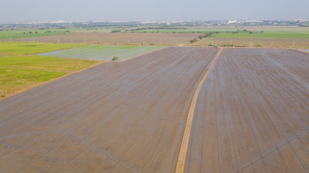 Luchtfoto van vliegende drone van veld rijst met landschap groen patroon natuur scène bovenaanzicht veld rijst