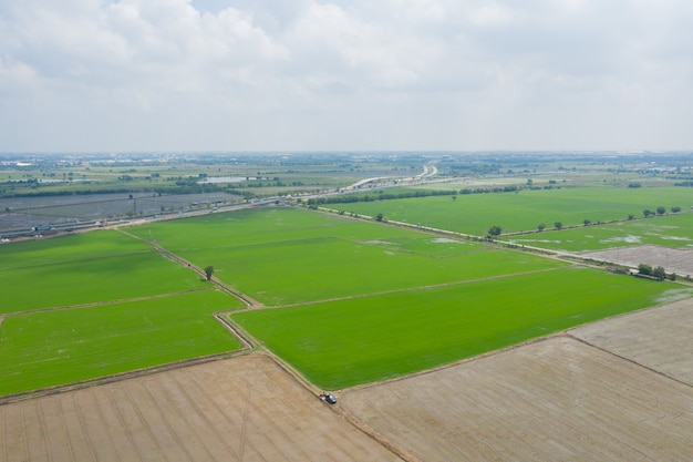 Luchtfoto van vliegende drone van veldrijst met landschaps groen patroon natuur achtergrond, bovenaanzicht veldrijst