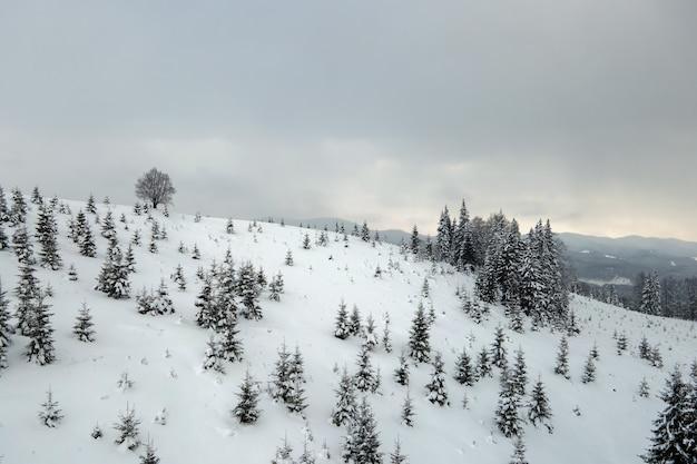 Luchtfoto van winterlandschap met bergheuvels bedekt met groenblijvend dennenbos na zware sneeuwval op koude rustige avond.