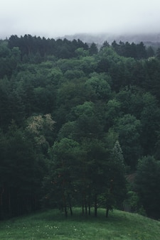 Luchtfoto van zomer groene bomen in bos in de bergen. bos boom bossen.
