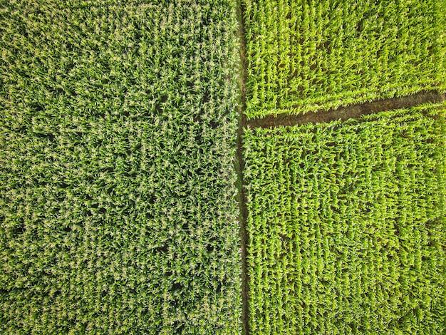 Luchtfoto veld omgeving bos natuur landbouw boerderij achtergrond maïsveld van bovenaf