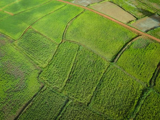 Luchtfoto veld omgeving bos natuur landbouw boerderij achtergrond rijstveld van bovenaf