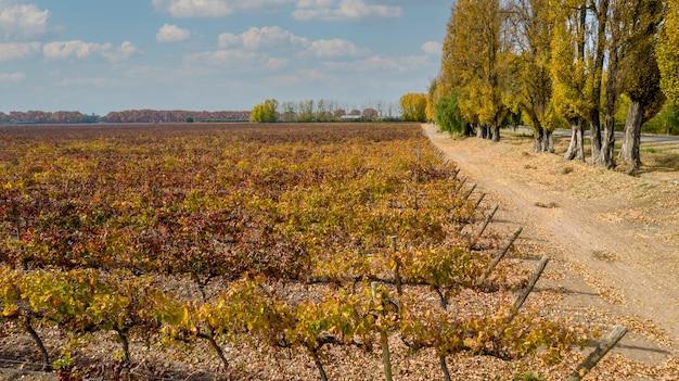 Luchtfoto wijngaarden van fijne druiven in de herfst