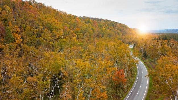 Luchtmening van de herfstbos op de berg dichtbij blauwe vijver