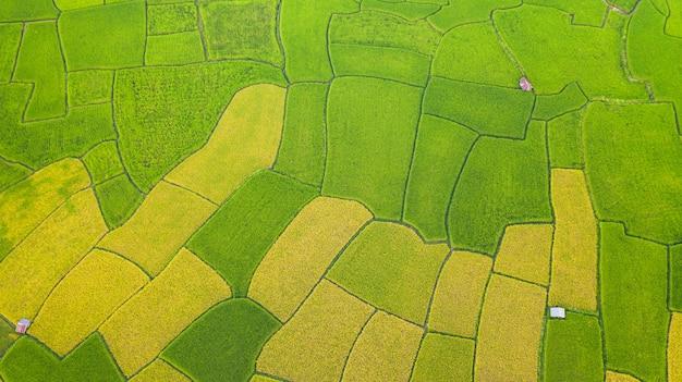 Luchtmening van het groene en gele verschillende patroon van het padieveldlandschap bij ochtend in noordelijk thailand