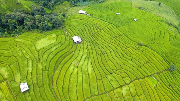 Luchtmening van het groene terrasvormige verschillende patroon van het padieveldenlandschap bij ochtend in noordelijk thailand