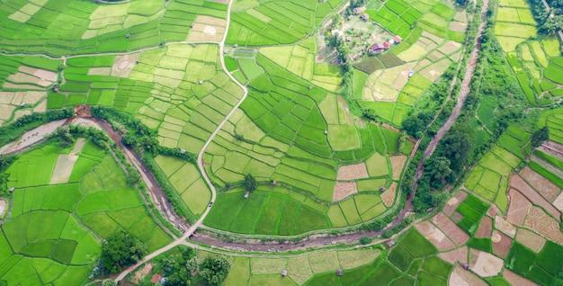 Luchtmening van het groene verschillende patroon van het padieveldlandschap bij ochtend in noordelijk thailand