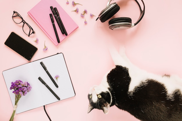 Luchtmening van kat met kantoorbehoeften op roze achtergrond