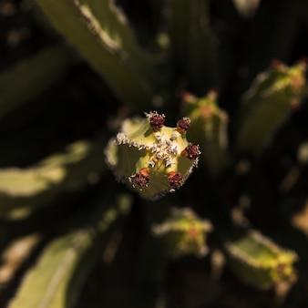 Luchtmening van saguarocactus met bloem