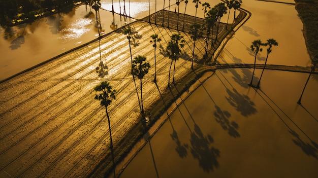 Luchtmening van suikerpalm met zonsonderganghemel