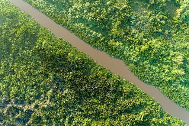 Luchtmeningshommel schot hoogste neer van groen bos en de natuurlandschap van de meer mooi wildernis voor achtergrond