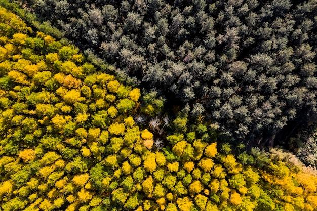 Luchtonderzoek van droog oud bos in de herfst van bovenaf