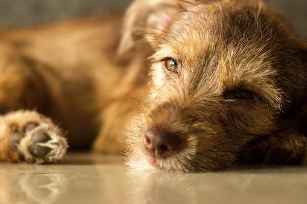 Luie baby hond huisdier wil slapen