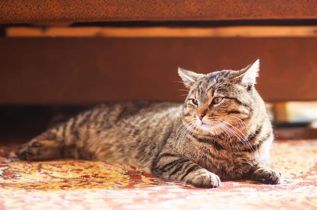 Luie gestreepte huiskat die thuis op kleurrijk tapijt ontspant.