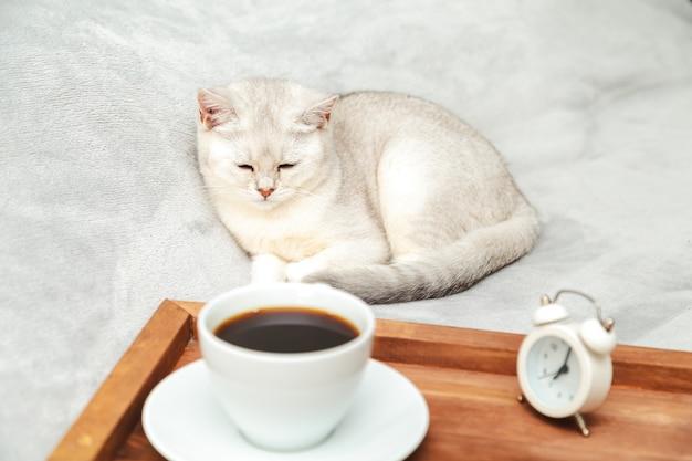 Luie witte britse kat slaapt op het bed. in de buurt van het dienblad met een kopje koffie en wekker. vroege morgen. selectieve aandacht.