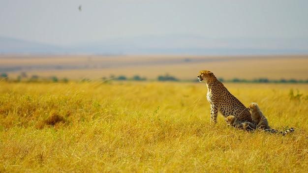 Luipaard met een kleintje zittend in een veld