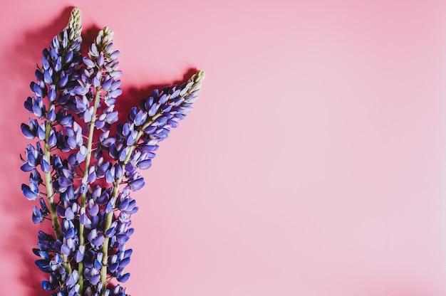 Lupine bloemen in blauw lila kleur in volle bloei op een roze achtergrond plat leggen. ruimte voor tekst