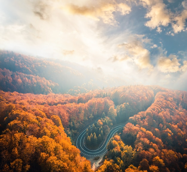 Lus van de transfagarasan-snelweg omgeven door bos