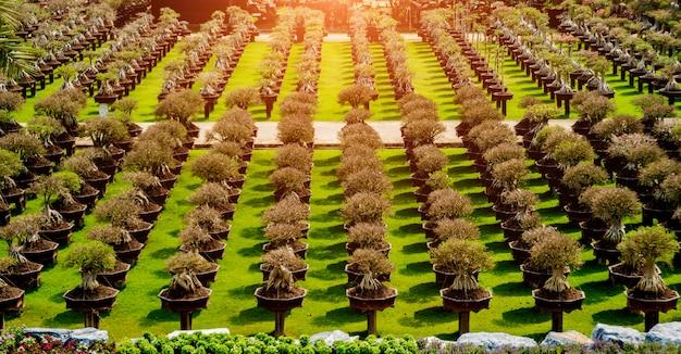 Luxe landschapsontwerp van de tropische tuin
